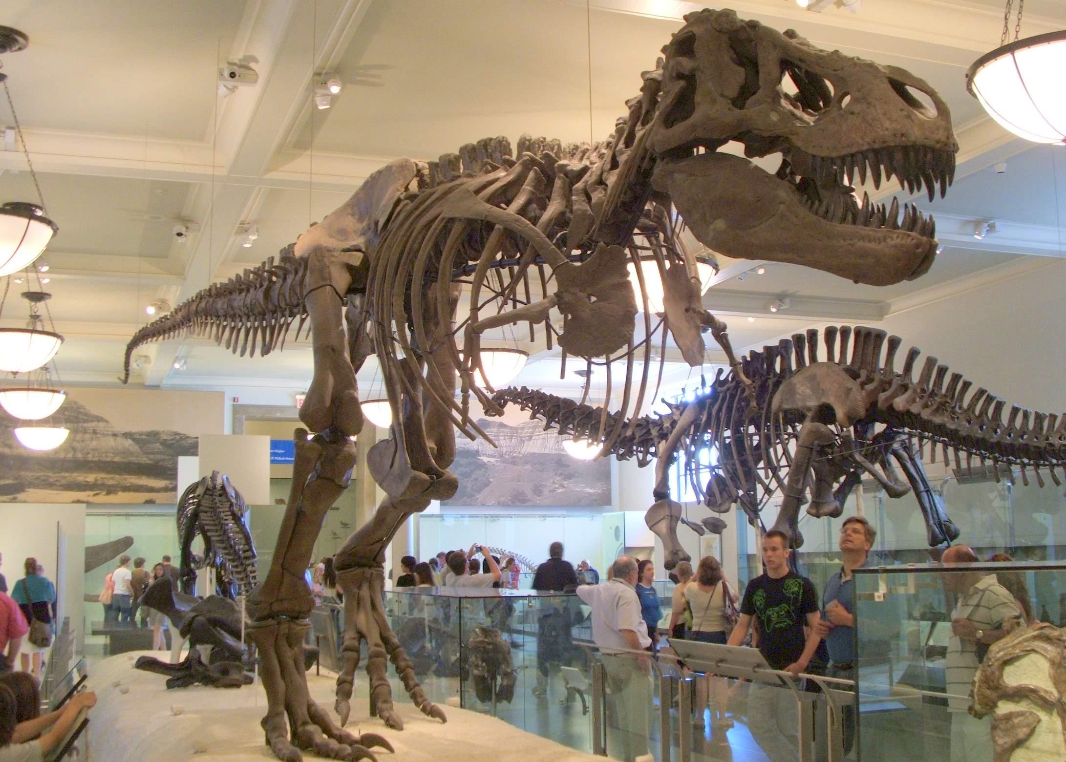 Museo Storia Naturale New York.New York Museo Di Storia Naturale