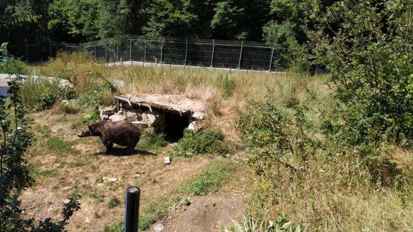 nel parco degli orsi danzanti troviamo un'orsa cieca